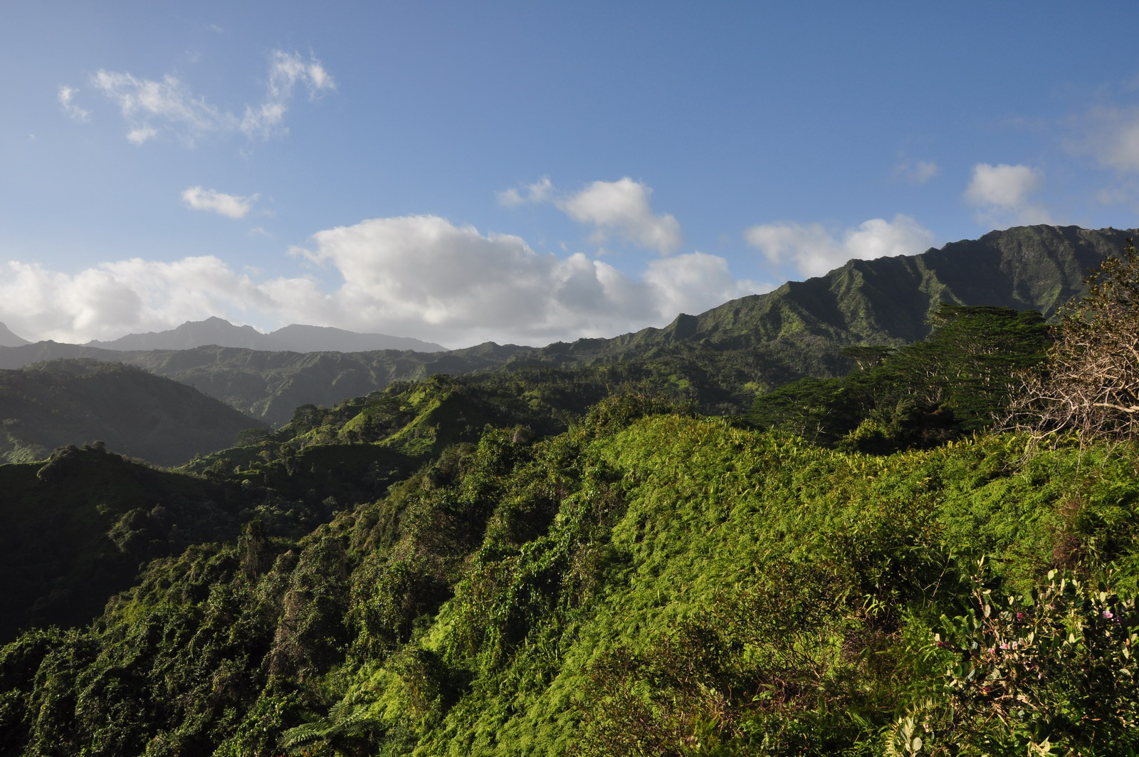 kuilau_ridge_trail_06