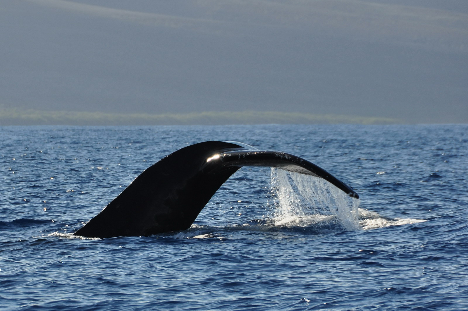 whales_01