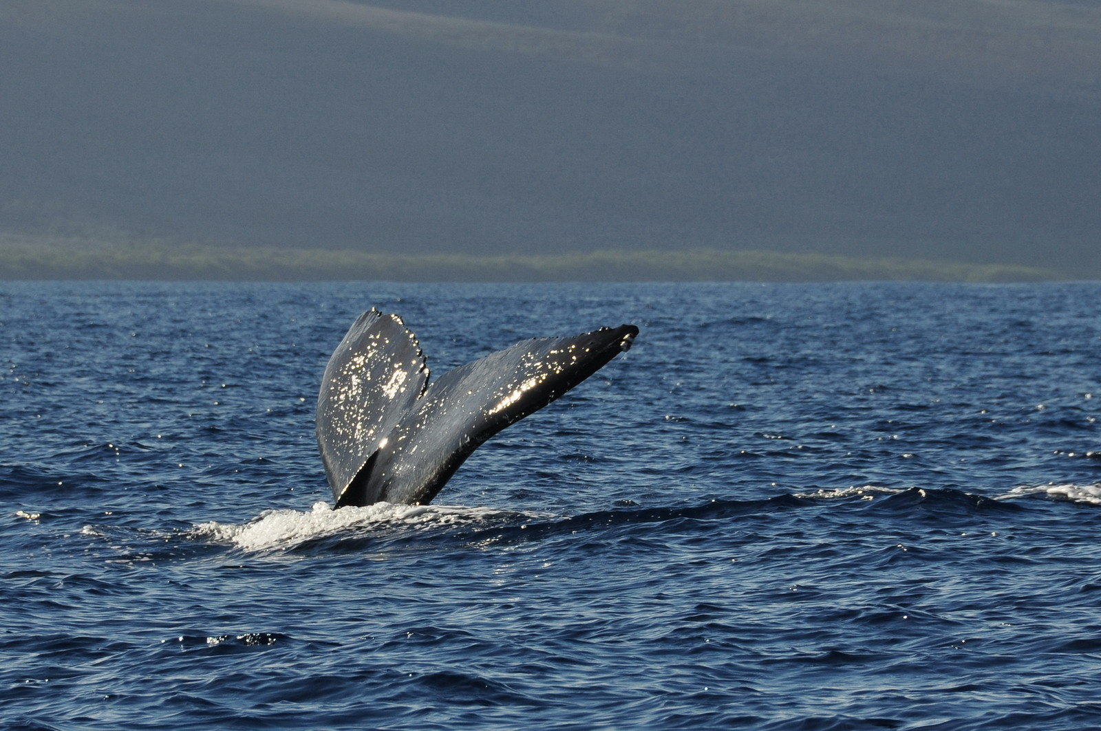 whales_02