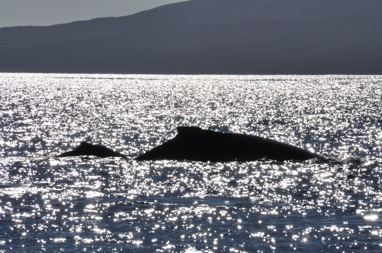 whales_03