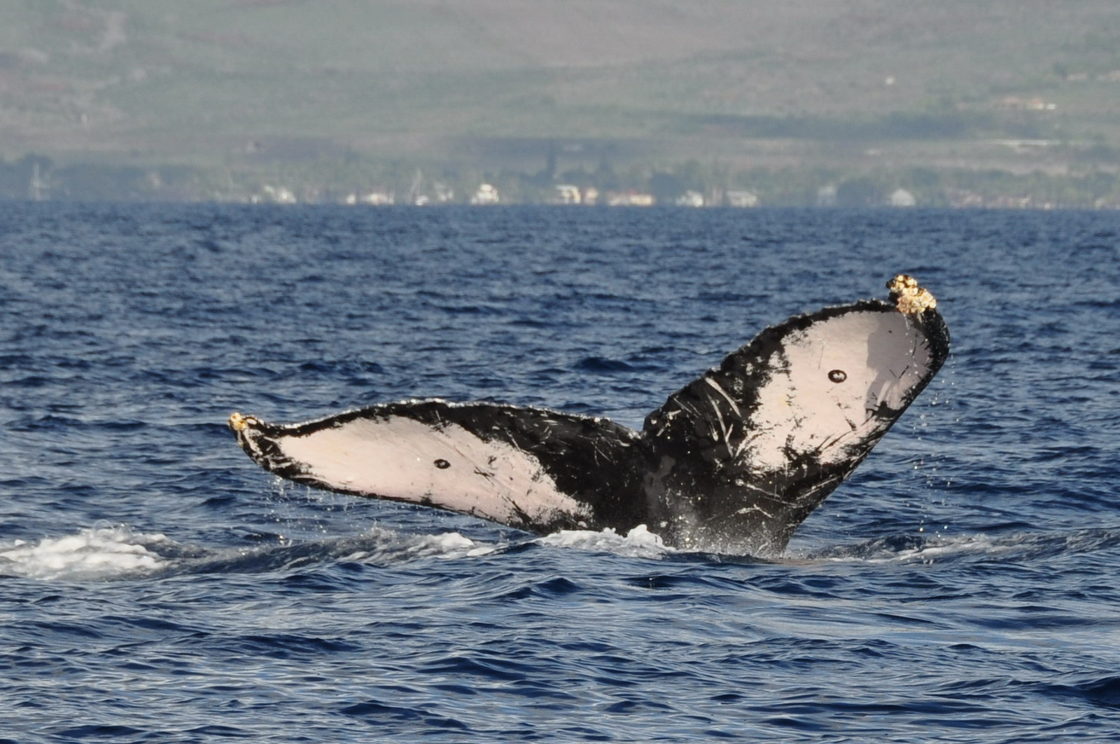 whales_04