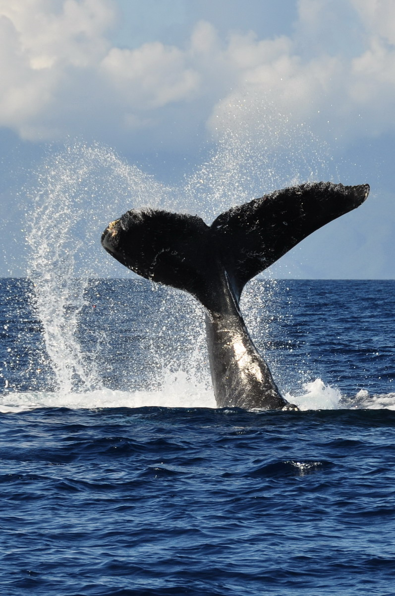 whales_07