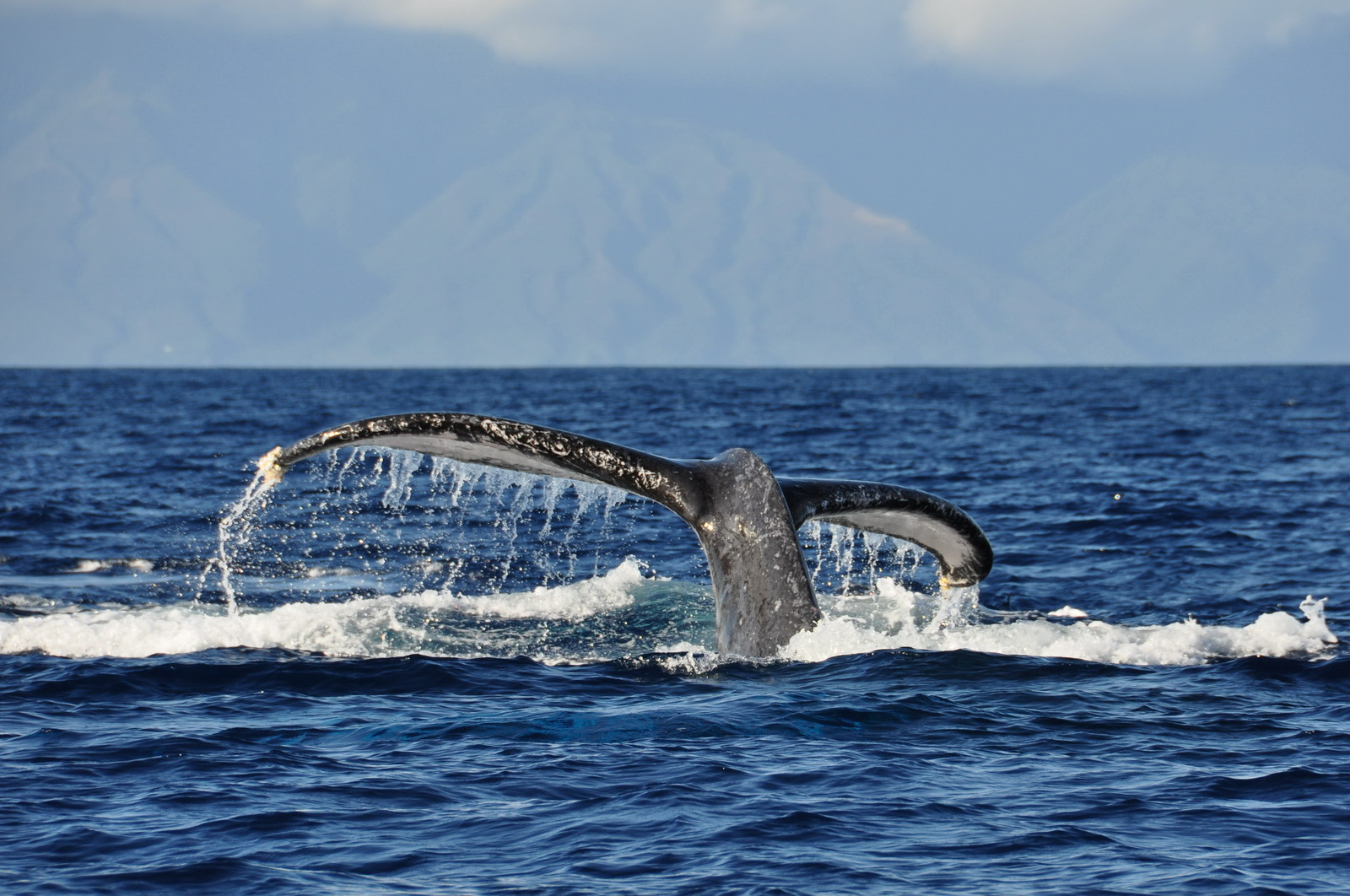 whales_10