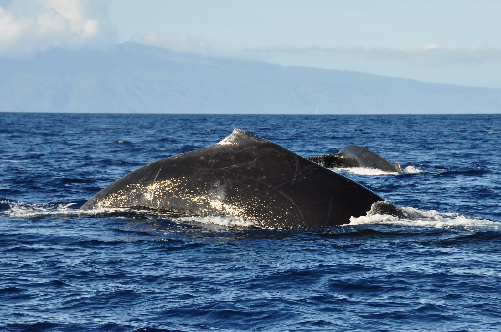whales_11