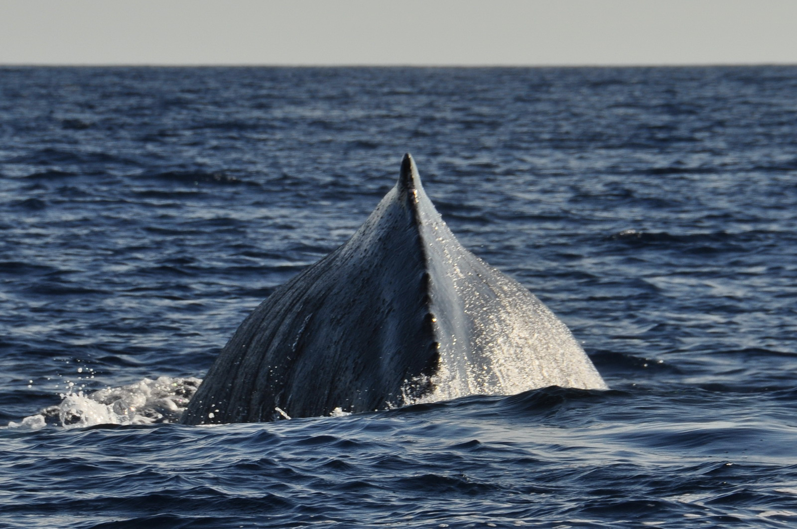 whales_16